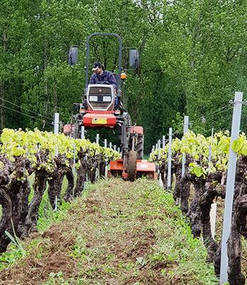L'environnement - Domaine du Haut Bourg - Travail du vignoble | DOMAINE DU HAUT BOURG